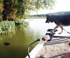 """<div class=""""source""""></div><div class=""""image-desc"""">Rosa, a member of the Grand Paws Search Dog Association, spots a baseball cap in the water and alerts her handler. </div><div class=""""buy-pic""""><a href=""""/photo_select/5630"""">Buy this photo</a></div>"""