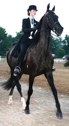 """<div class=""""source"""">Molly Haines</div><div class=""""image-desc"""">The Owen County 4-H Fair & Horse Show got into full swing Monday night with the annual open horse show. A participant in the Amateur English Pleasure category of the horse show puts her horse through its paces</div><div class=""""buy-pic""""><a href=""""http://web2.lcni5.com/cgi-bin/c2newbuyphoto.cgi?pub=033&orig=Fair1.jpg"""" target=""""_new"""">Buy this photo</a></div>"""
