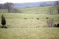 """<div class=""""source""""></div><div class=""""image-desc"""">Farmers from across Kentucky gathered at the Eden Shale farm in Owen County April 12 to mend fence and survey the farm. Attendees brought off-road equipment to navigate the rolling hills of the farm and were split into small groups to ride fence lines. The Kentucky Beef Network officially agreed to a cooperative agreement with the University of Kentucky College of Agriculture for the use of the farm. This was one of the first official outings to the farm since the change.</div><div class=""""buy-pic""""><a href=""""http://web2.lcni5.com/cgi-bin/c2newbuyphoto.cgi?pub=033&orig=Farm.jpg"""" target=""""_new"""">Buy this photo</a></div>"""