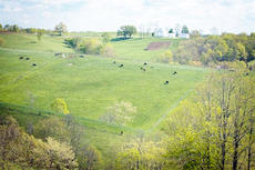 """<div class=""""source"""">Photo courtesy of the University of Kentucky</div><div class=""""image-desc"""">Due to budget cuts, the University of Kentucky has decided to close the Eden Shale Research Farm in Owen County.</div><div class=""""buy-pic""""><a href=""""http://web2.lcni5.com/cgi-bin/c2newbuyphoto.cgi?pub=033&orig=eden-shale.jpg"""" target=""""_new"""">Buy this photo</a></div>"""
