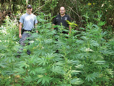 "<div class=""source""></div><div class=""image-desc"">Kentucky State Police Trooper  Brad Arterburn, left, and Owen County Sheriff's Deputy Marty Lilly offer some perspective on the size of the plants seized last week.</div><div class=""buy-pic""><a href=""/photo_select/1823"">Buy this photo</a></div>"