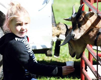 Victoria Whitaker feeds goats at the petting zoo during Saturday’s fair.