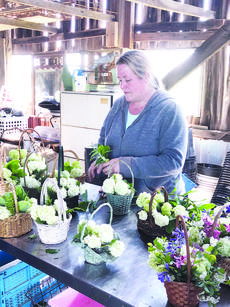 """<div class=""""source"""">Photo by Molly Haines/N-H Editor</div><div class=""""image-desc"""">Sayward Stamper works to prepare flower baskets for Mother's Day at Hazelfield Farm Thursday. Stamper handles the farm's website, social media accounts and also assists brides in picking out flowers for their big day.</div><div class=""""buy-pic""""><a href=""""/photo_select/17890"""">Buy this photo</a></div>"""