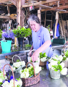 """<div class=""""source"""">Photo by Molly Haines/N-H Editor</div><div class=""""image-desc"""">Teresa Biagi works inside an old tobacco farm located on Hazelfield Farm preparing Mother's Day baskets Thursday. </div><div class=""""buy-pic""""><a href=""""/photo_select/17892"""">Buy this photo</a></div>"""