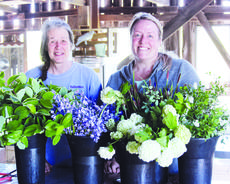 """<div class=""""source"""">Photo by Molly Haines/N-H Editor</div><div class=""""image-desc"""">Teresa Biagi and her daughter, Sayward Stamper of Hazelfield Farm, stop for a photo with freshly-cut flowers from the farm Thursday. Hazelfield Farm specializes in cut flowers for weddings and other events around the area. The farm, located on Butler Inn Road in Wheatley, has been in operation since 1998.</div><div class=""""buy-pic""""><a href=""""/photo_select/17891"""">Buy this photo</a></div>"""